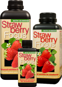 Growth Technology Strwaberry Focus 1l